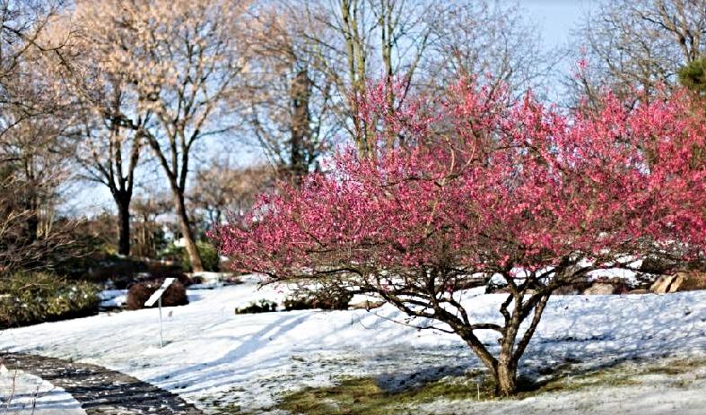 Kam právě přichází jaro