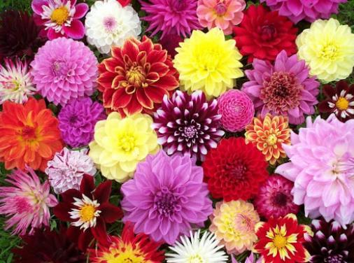 Krásky z Mexika v Lysé nad Labem